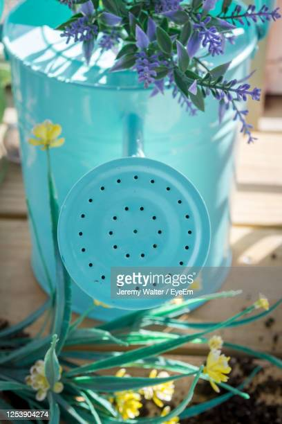 close-up of potted plant on table - eyeem jeremy walter stock pictures, royalty-free photos & images