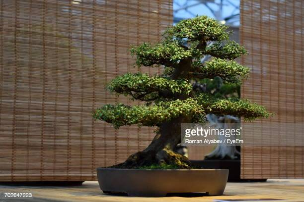 459 Bonsai Table Photos And Premium High Res Pictures Getty Images
