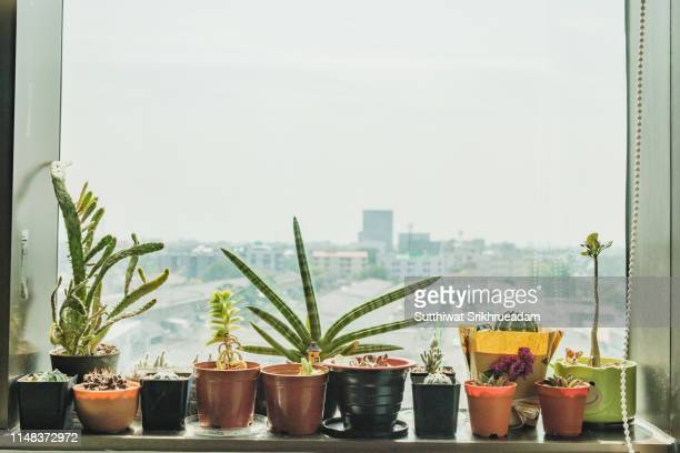 close-up of potted plant on window sill against sky in city - houseplant stock pictures, royalty-free photos & images