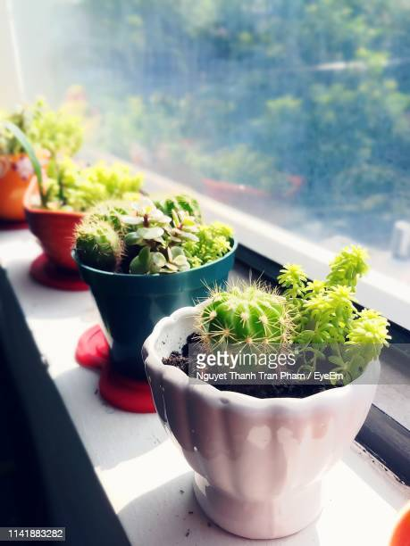 close-up of potted plant on window sill - ledge stock pictures, royalty-free photos & images