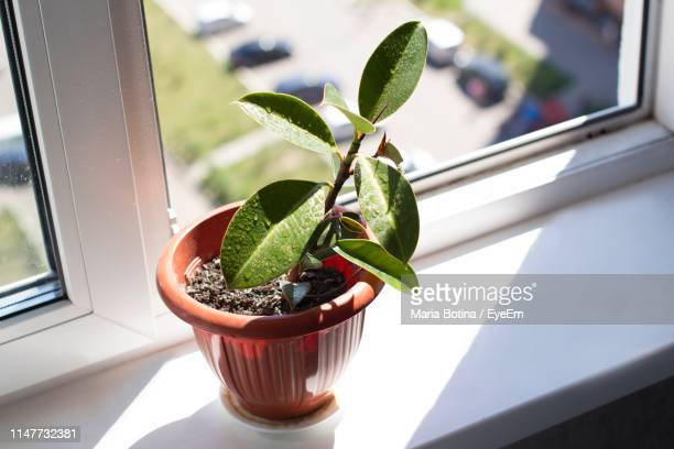 close-up of potted plant on window sill - window sill stock pictures, royalty-free photos & images