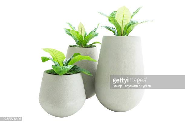 close-up of potted plants against white background - pot plant stock pictures, royalty-free photos & images