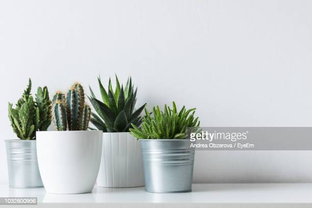 close-up of potted plants against white background - succulent stock pictures, royalty-free photos & images