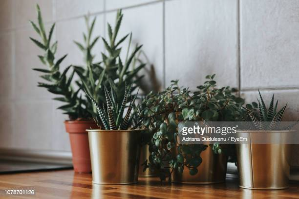 close-up of potted plants on table at home - houseplant stock pictures, royalty-free photos & images