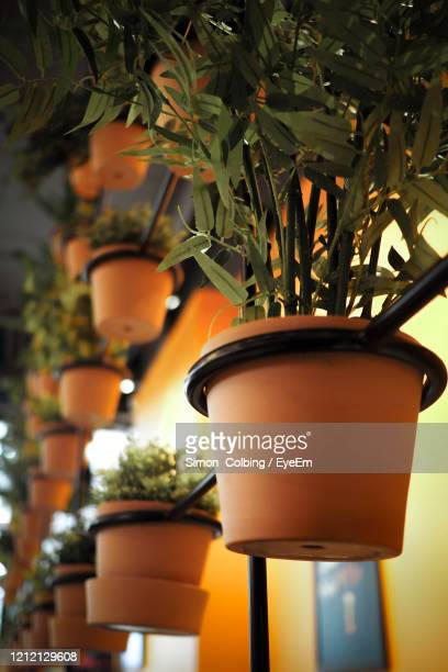 close-up of potted plants - colbing stock pictures, royalty-free photos & images