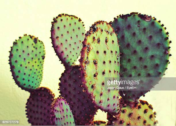 close-up of prickly pear cactus against sky - prickly pear cactus stock photos and pictures