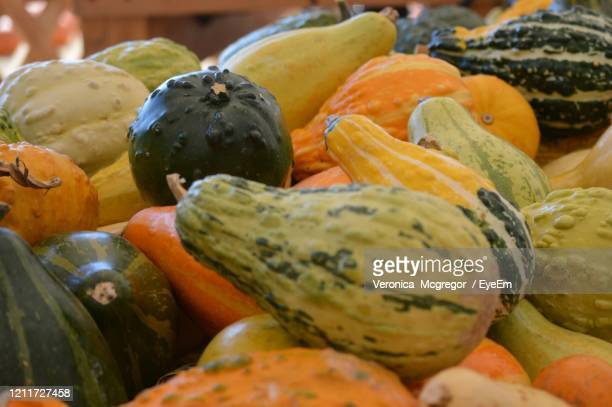 close-up of pumpkins in market - mcgregor stock pictures, royalty-free photos & images