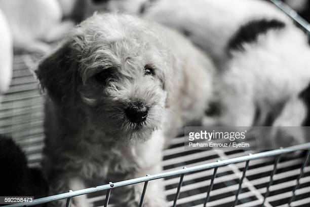 close-up of puppies in metal container - parham emrouz stock pictures, royalty-free photos & images