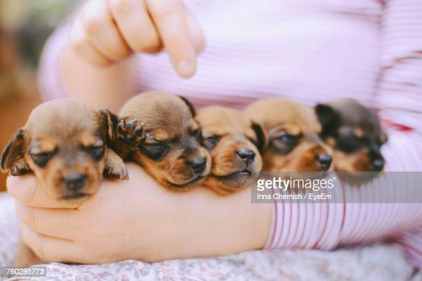 Close-Up Of Puppies Sleeping