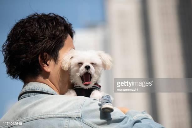 子犬と男のクローズアップ - あくび ストックフォトと画像