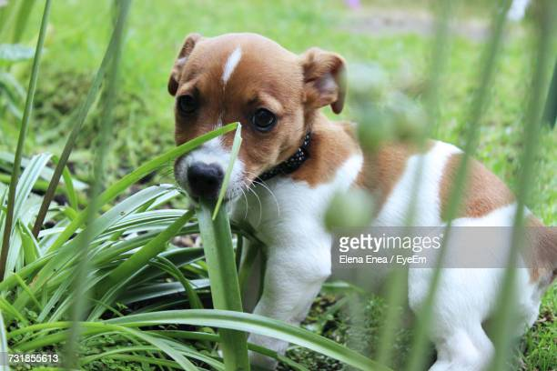 close-up of puppy outdoors - vertebrate stockfoto's en -beelden