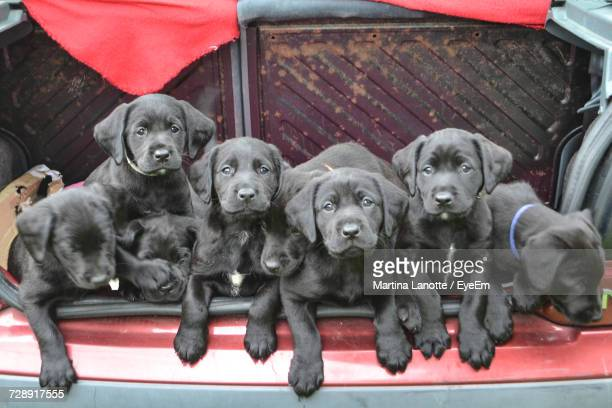 close-up of puppy - large group of animals stock pictures, royalty-free photos & images