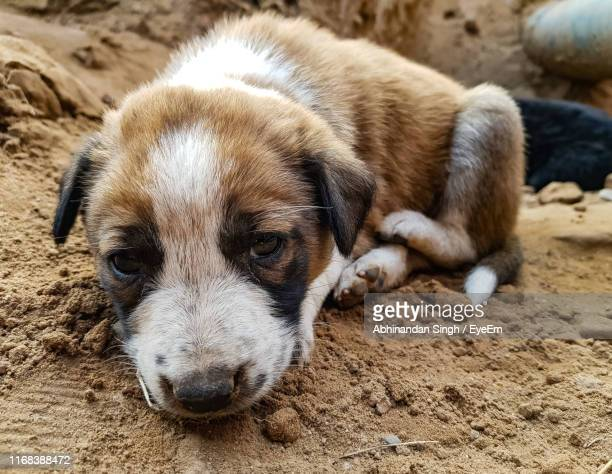 Close-Up Of Puppy Sleeping On Sand