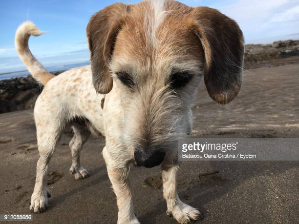 Close-Up Of Puppy Standing At Beach Against Sky