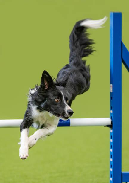 Close-up of purebred dog playing on ladder against green background,United Kingdom,UK