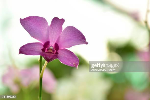 Tropical flower stock photos and pictures getty images close up of purple flower blooming outdoors mightylinksfo Choice Image