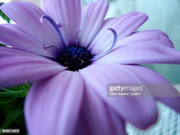 Close-Up Of Purple Flower Growing On Plant
