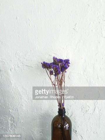 Closeup Of Purple Flower In Vase Against Wall High-Res ...