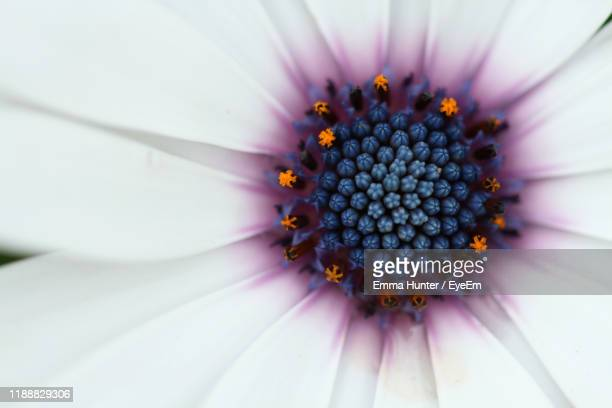 close-up of purple flower - emma hunter eye em stock photos and pictures