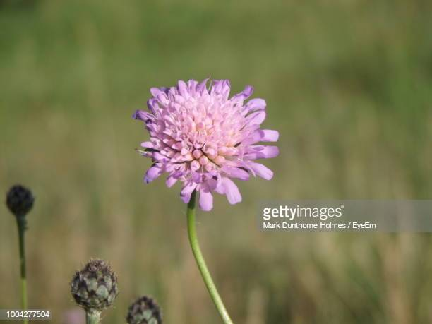 close-up of purple flowering plant on field - mark's stock pictures, royalty-free photos & images