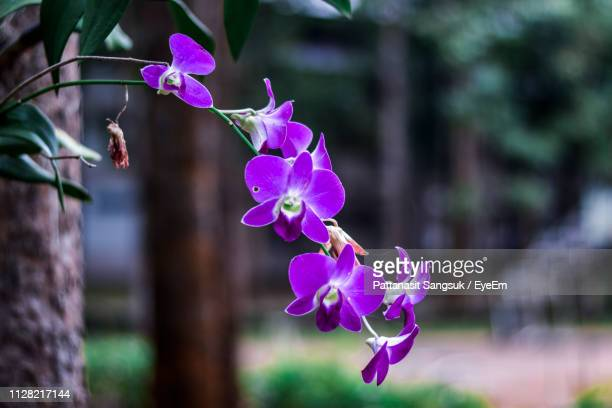 close-up of purple flowering plant - pattanasit stock pictures, royalty-free photos & images