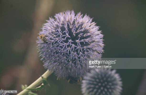 close-up of purple flowering plant - mark's stock pictures, royalty-free photos & images
