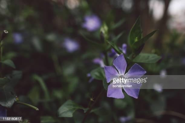 close-up of purple flowering plant - bortes fotografías e imágenes de stock