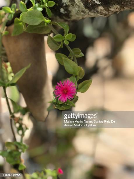 close-up of purple flowering plant - marlon reis stock pictures, royalty-free photos & images