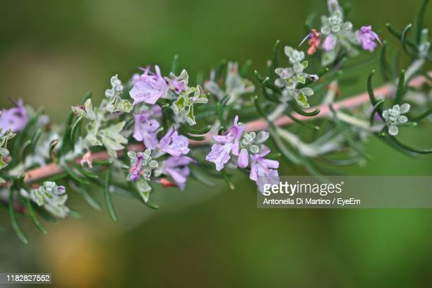 close-up of purple flowering plant - antonella di martino foto e immagini stock
