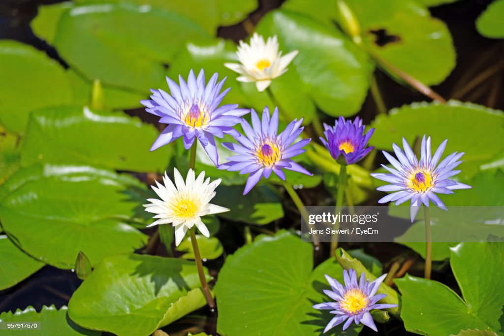 Close-Up Of Purple Flowering Plant : Stock Photo