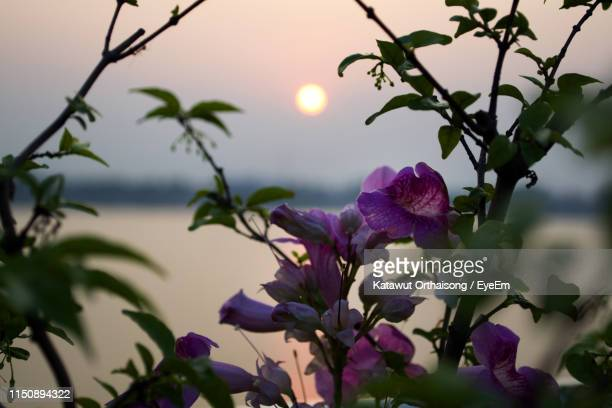 close-up of purple flowering plants against sky - flower moon stock pictures, royalty-free photos & images