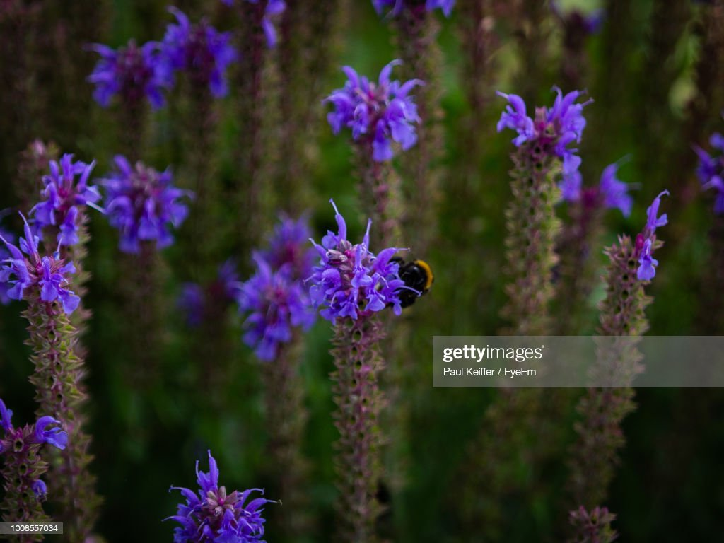 Close-Up Of Purple Flowering Plants : Stock Photo