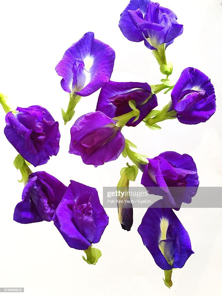 Closeup Of Purple Flowers Against White Background Stock Photo ...