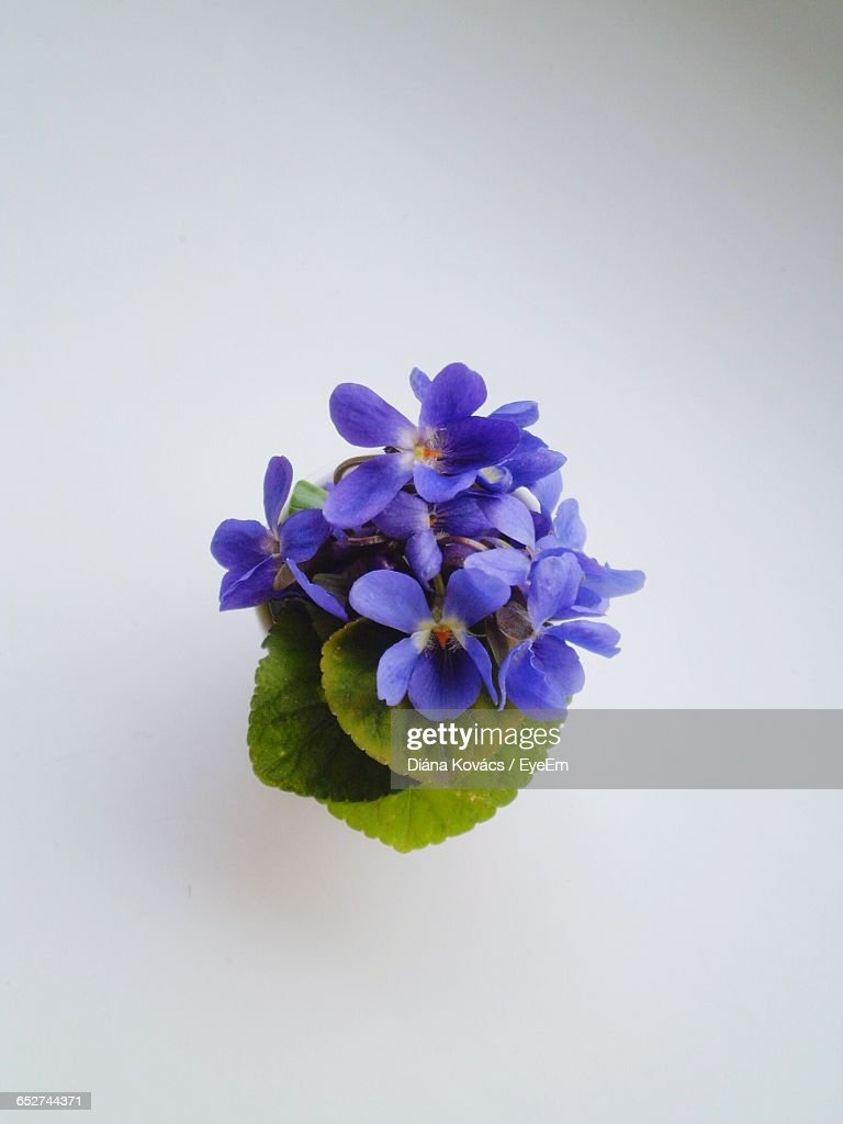 Closeup Of Purple Flowers Blooming Against White Background Stock
