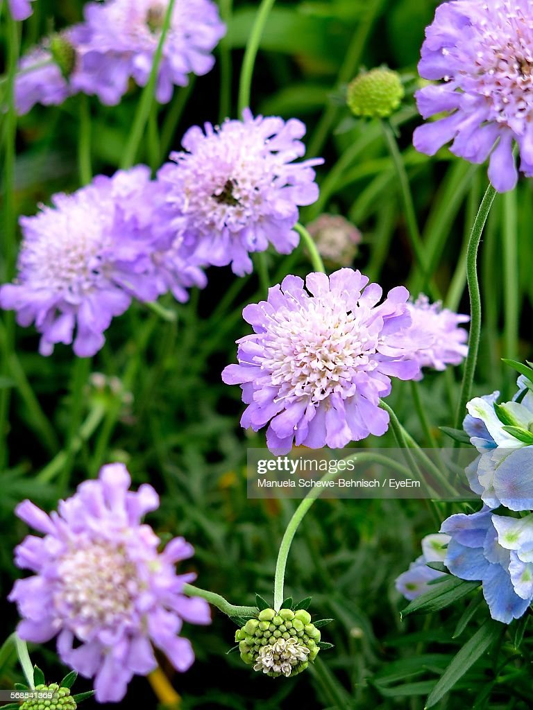 Close-Up Of Purple Flowers Blooming On Field : Stock Photo