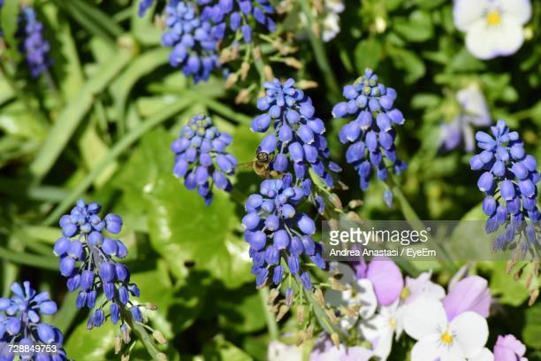 close-up of purple flowers blooming outdoors - anastasi foto e immagini stock