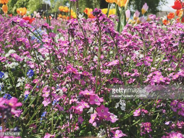 close-up of purple flowers blooming outdoors - north lincolnshire stock pictures, royalty-free photos & images