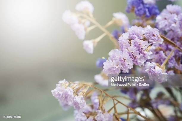 close-up of purple flowers - metthapaul stock photos and pictures