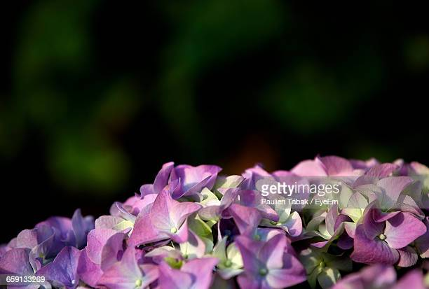close-up of purple flowers - paulien tabak foto e immagini stock