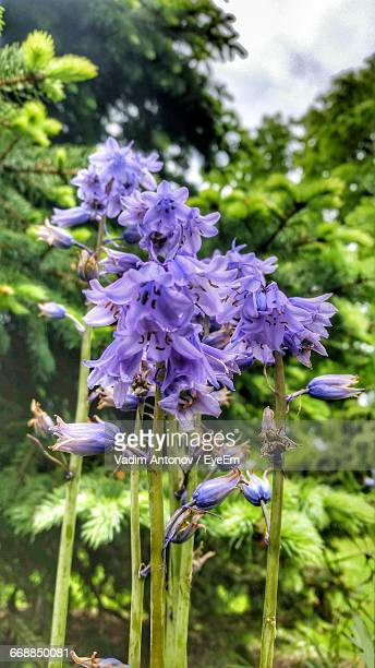 close-up of purple flowers - antonov stock pictures, royalty-free photos & images