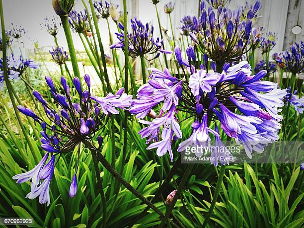 close-up of purple flowers - port talbot stock pictures, royalty-free photos & images