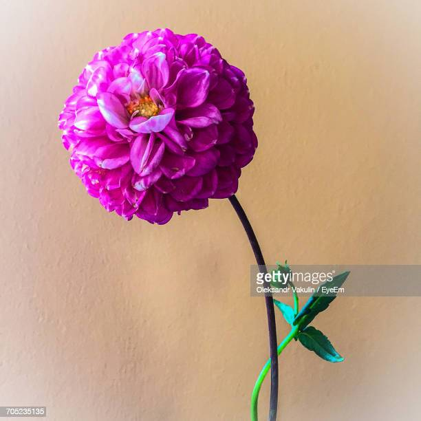 close-up of purple flowers - oleksandr vakulin stock pictures, royalty-free photos & images