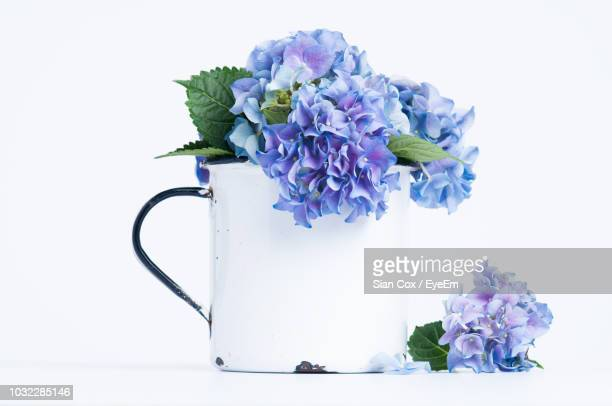 close-up of purple hydrangeas in vase against white background - あじさい ストックフォトと画像