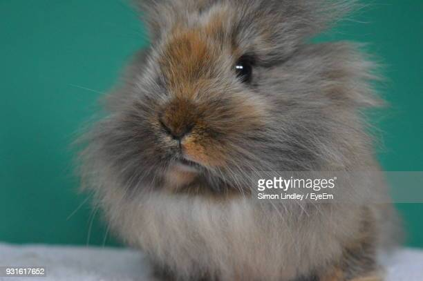 Close-Up Of Rabbit Against Wall