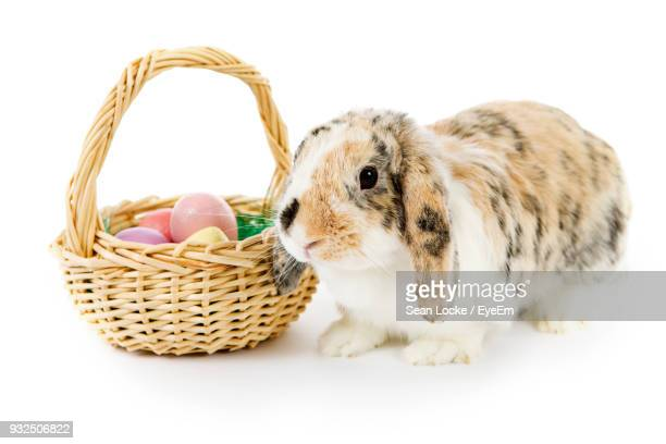 Close-Up Of Rabbit By Easter Eggs In Wicker Basket Against White Background
