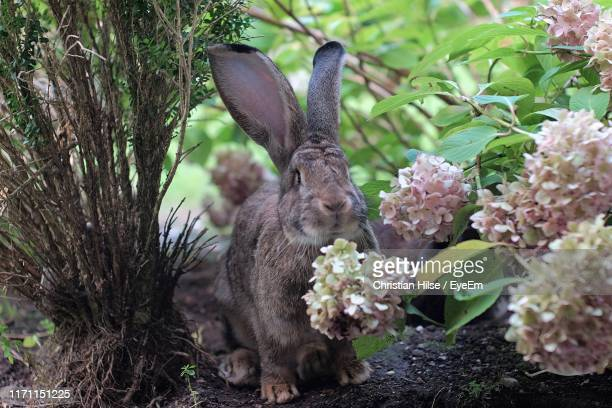 close-up of rabbit by flowering plants - christian hilse stock-fotos und bilder