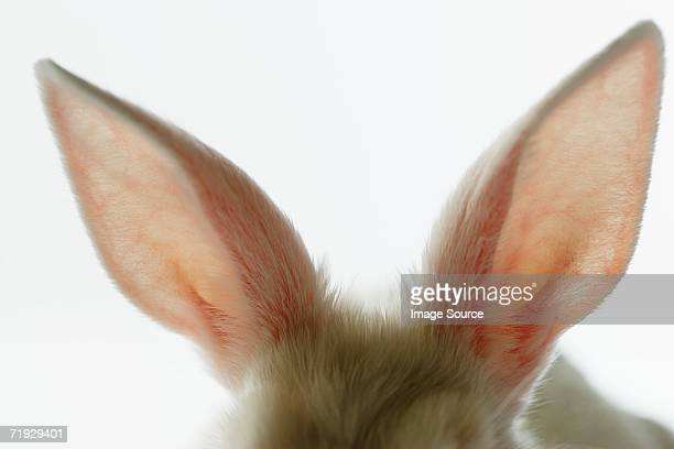 close-up of rabbit ears - animal ear stock photos and pictures