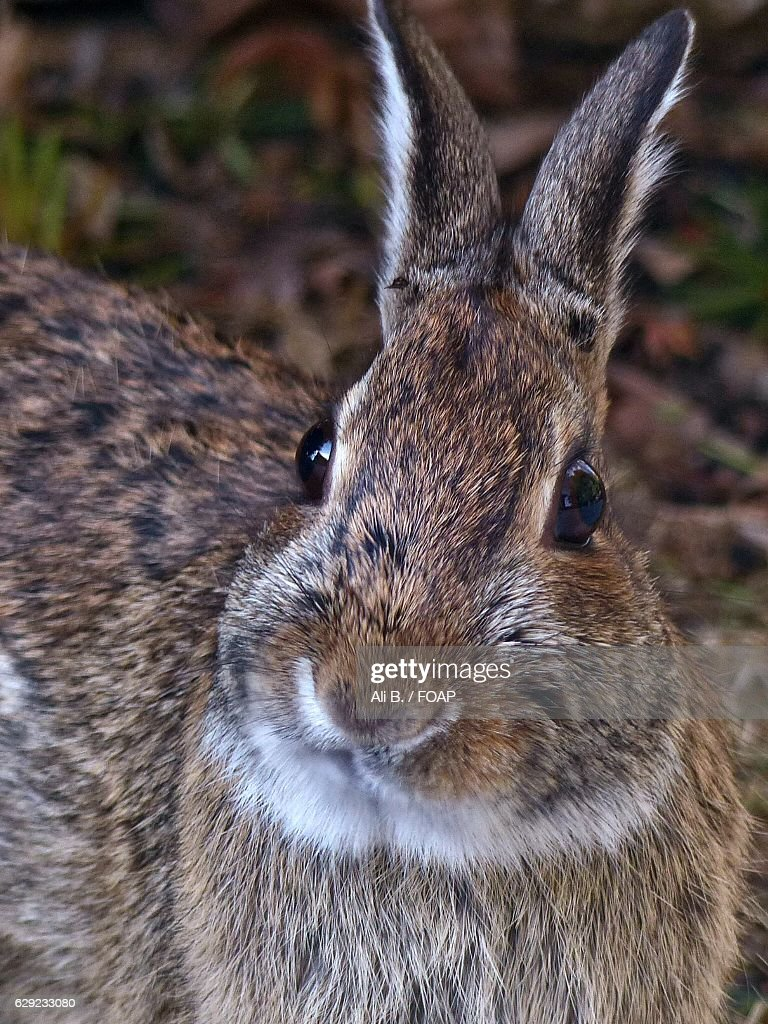 Purpose of rabbits facial cheek glands — photo 9