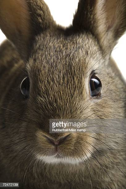 Close-up of rabbit face