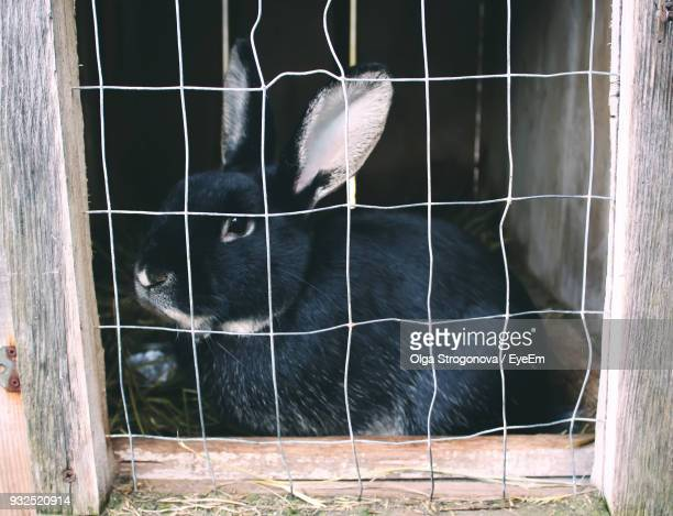 Close-Up Of Rabbit In Cage